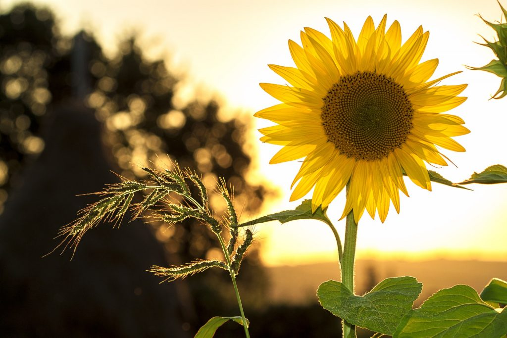light-nature-sky-sunset-33044